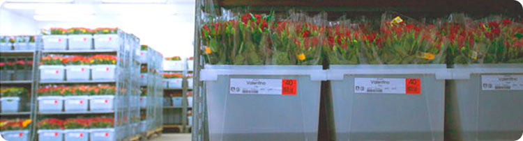 Omniflora - Cut Flowers - Wholesale
